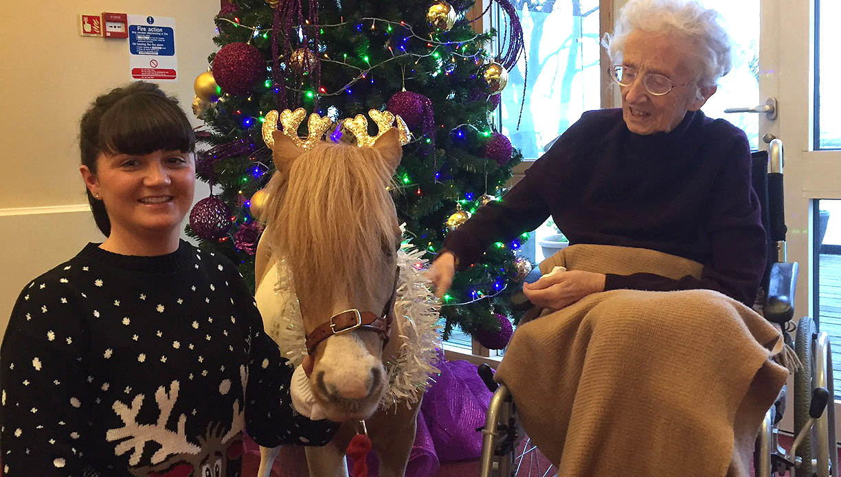 1de9f53f6ba1 Miniature therapy pony Fudge Cake and his owner Jess O'Brien pay a visit to  Mariners' Park resident Rita Carrier .